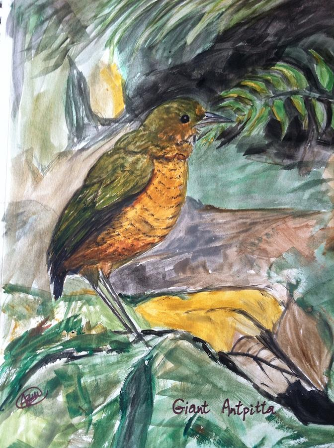 Nature Drawing - Antpitta by Asuncion Purnell