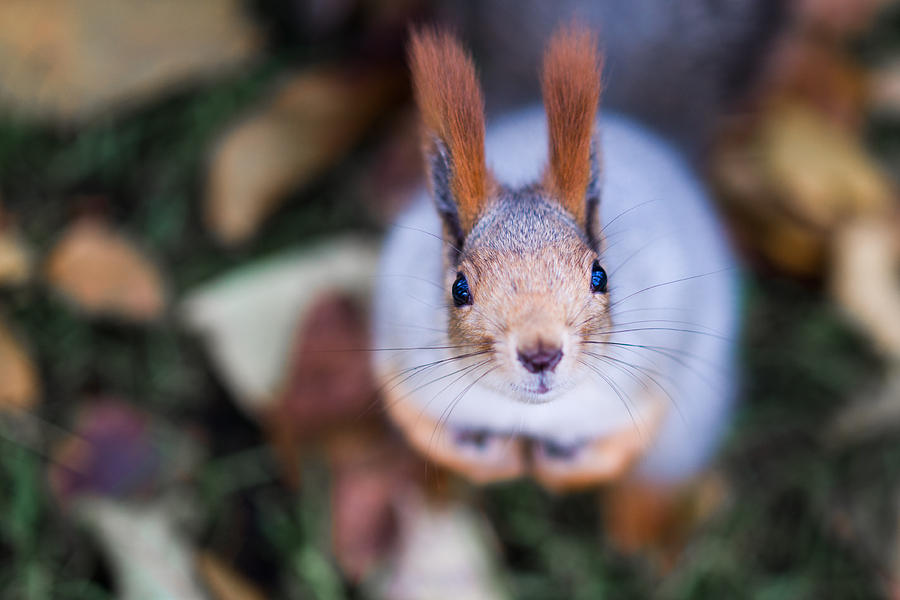 Adorable Photograph - Anyting To Bite - Featured 3 by Alexander Senin