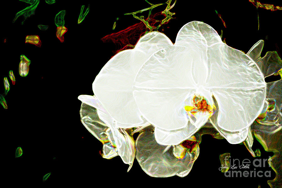 Orchid Photograph - Aos White Orchid 1 by Janis Lee Colon