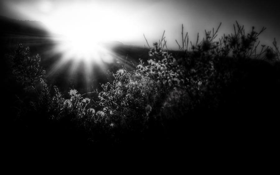 Apache Plume Morning Photograph