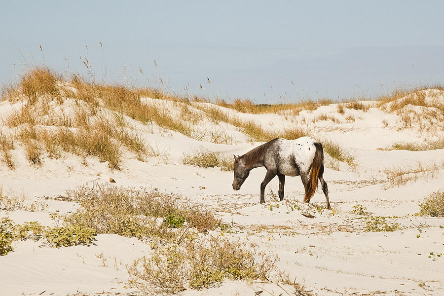 Cumberland Island Photograph - Appaloosa Beach by Barbara Northrup