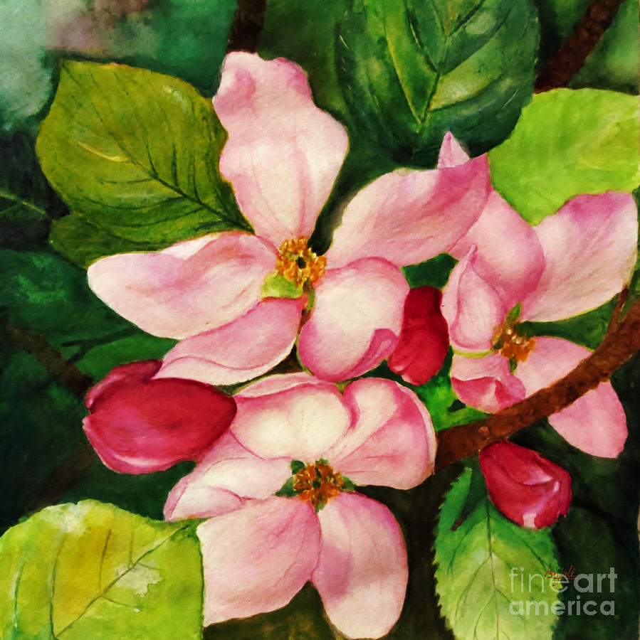 Apple Blossom Painting - Apple Blossom by Anjali Vaidya