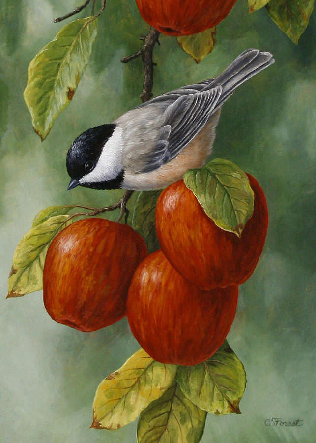Bird Painting - Apple Chickadee Greeting Card 3 by Crista Forest