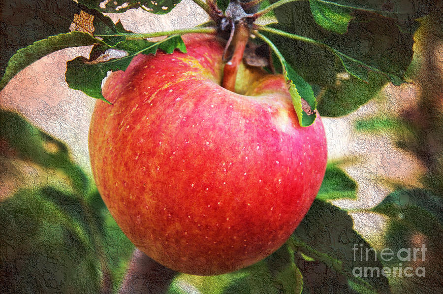 Red Photograph - Apple On The Tree by Andee Design