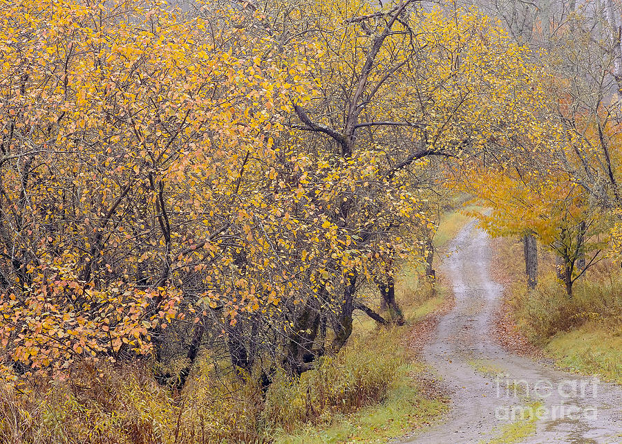 Autumn Photograph - Apple Orchard Road by Alan L Graham