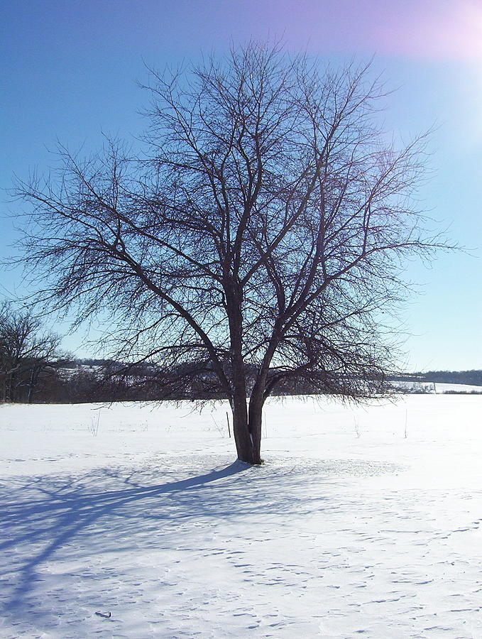 Apple Tree In Winter Photograph By Paula Morhardt