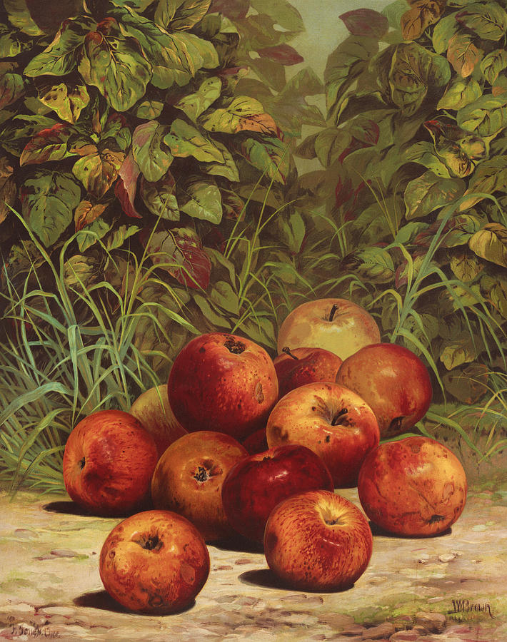 Apples Painting - Apples Circa 1868 by Aged Pixel