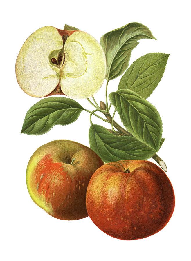 Apples Digital Art by Ivan-96