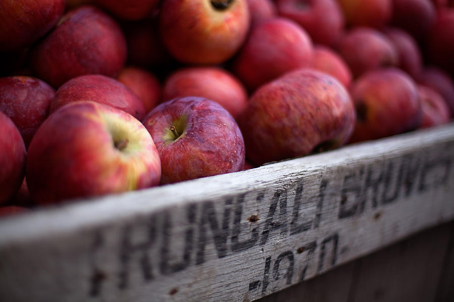 Apples Photograph - Apples by June Marie Sobrito