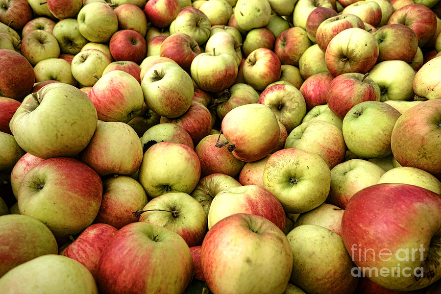 Apple Photograph - Apples by Olivier Le Queinec