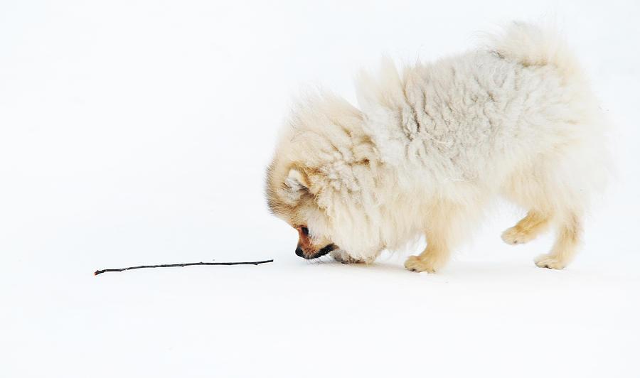 Dog Photograph - Apport by Jenny Rainbow