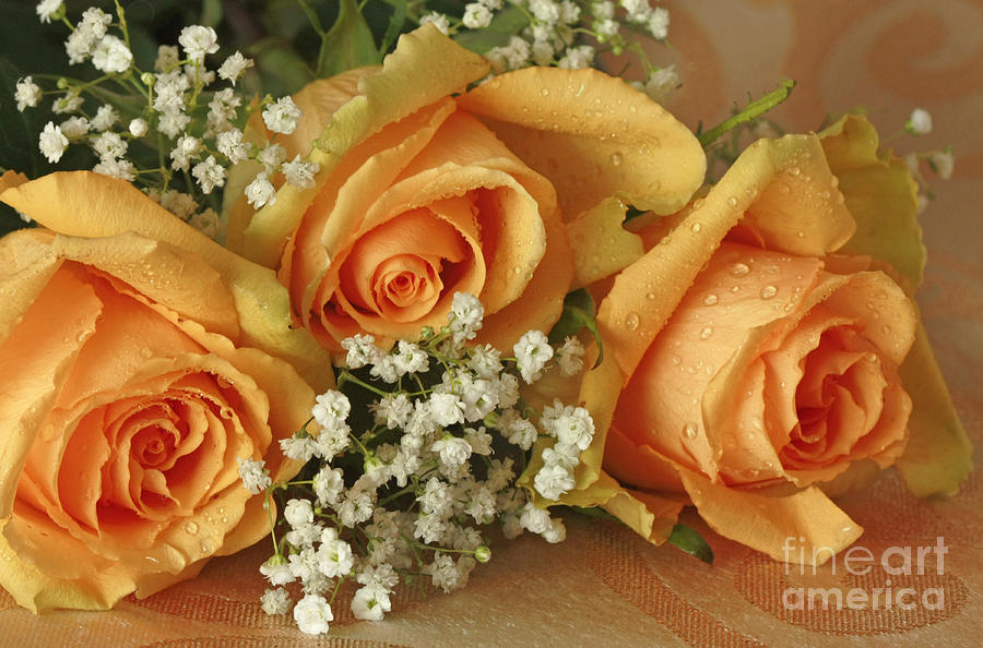 Apricot Rose Bouquet Photograph By Inspired Nature Photography