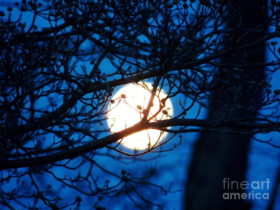 Moon Photograph - April Morning Moon by Judy Via-Wolff