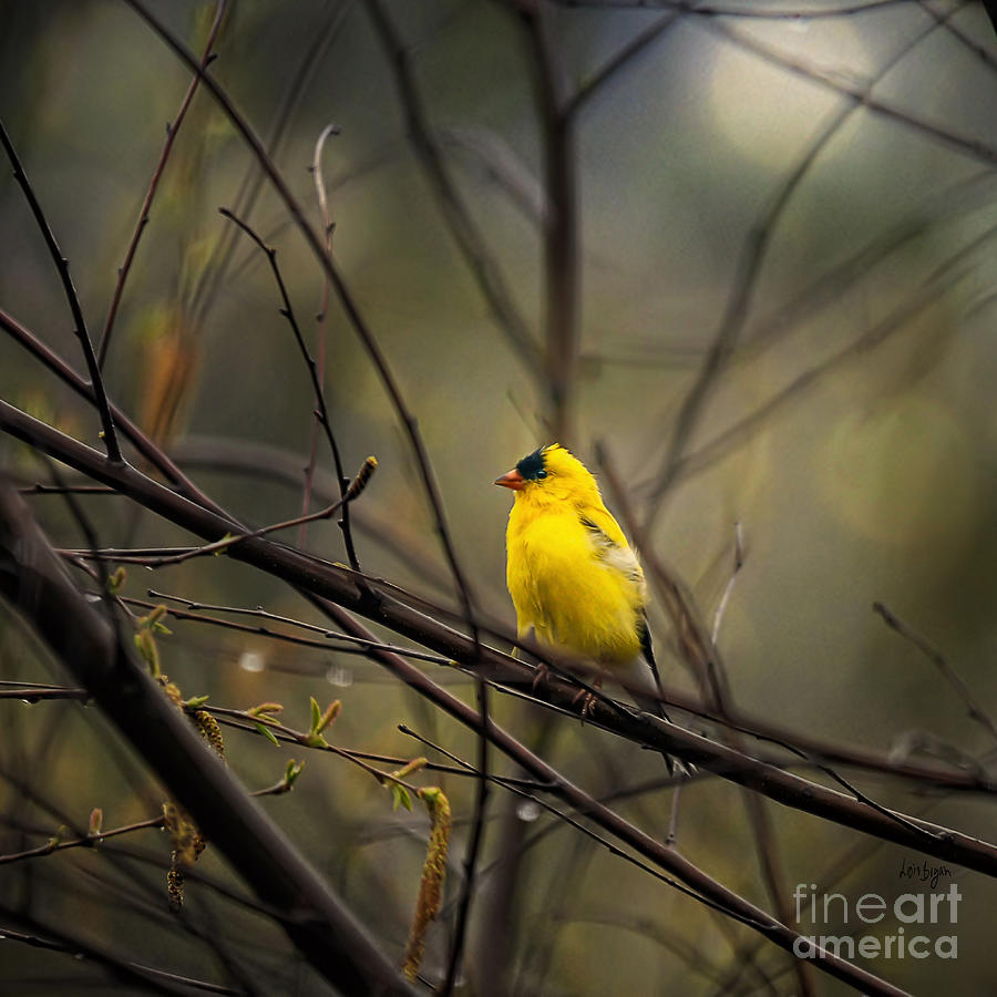 Bird Photograph - April Showers In Square Format by Lois Bryan