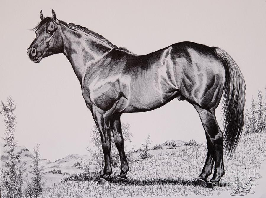 Aqha Stallion Driftwood Drawing by Cheryl Poland