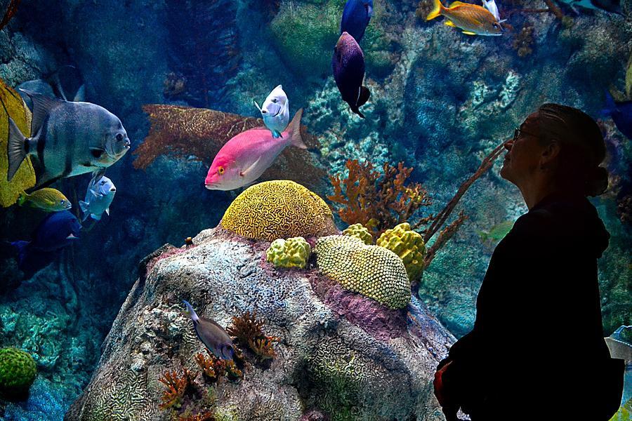 Aquarium Photograph - Aqua by Gerald Greenwood