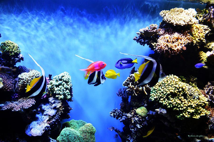 Barbara Snyder Digital Art - Aquarium 1 by Barbara Snyder