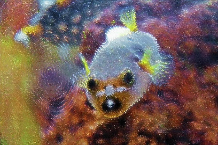 Fish Photograph - Aquarium Art 16 by Steve Ohlsen