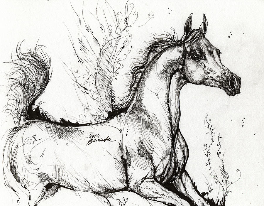Horse Drawing - Arabian Horse Drawing 1 by Angel  Tarantella