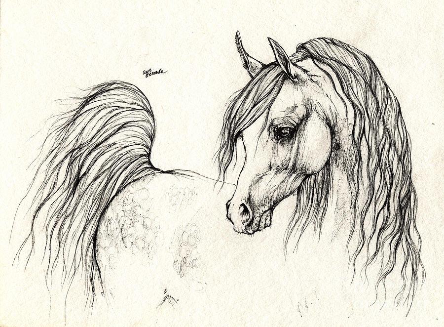Arabian Horse Head Drawings | www.pixshark.com - Images ...