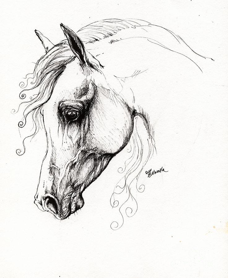 Fairytale Drawing - Arabian Horse Drawing 15 by Angel  Tarantella