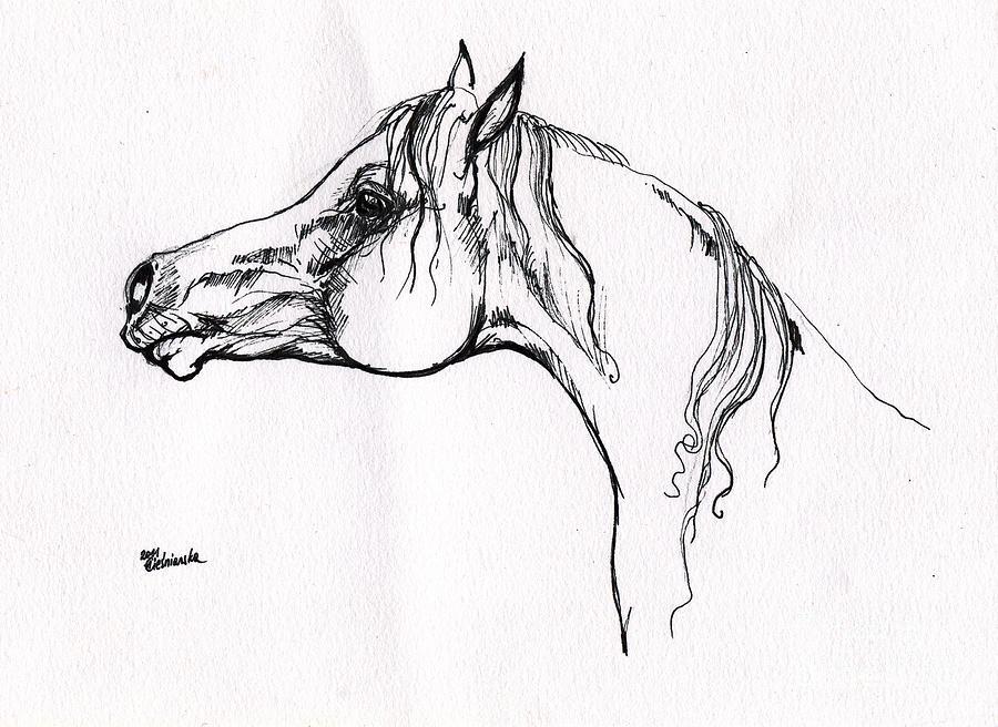 arabian horse drawing 20 drawing by angel ciesniarska