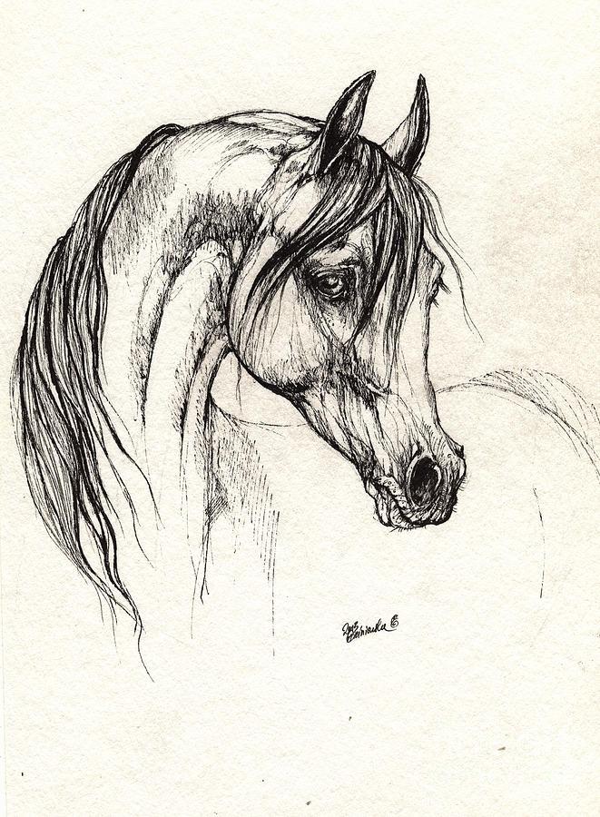 arabian horse drawing 28 08 2013 drawing by angel ciesniarska. Black Bedroom Furniture Sets. Home Design Ideas