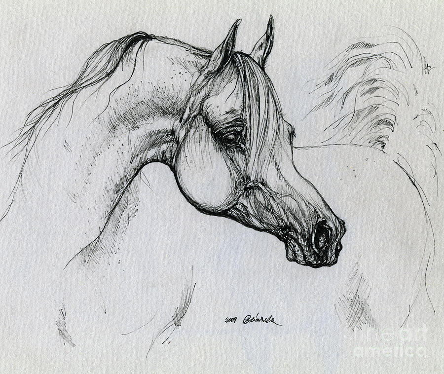 Horse Drawing - Arabian Horse Drawing 28 by Angel Ciesniarska