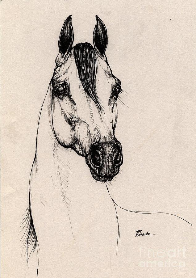 Arabian Horse Drawing - Arabian Horse Drawing 29 by Angel Ciesniarska