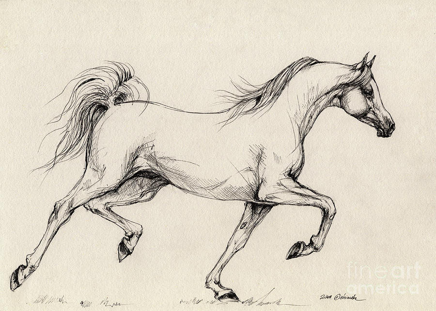 Grey Drawing - Arabian Horse Drawing 31 by Angel Ciesniarska
