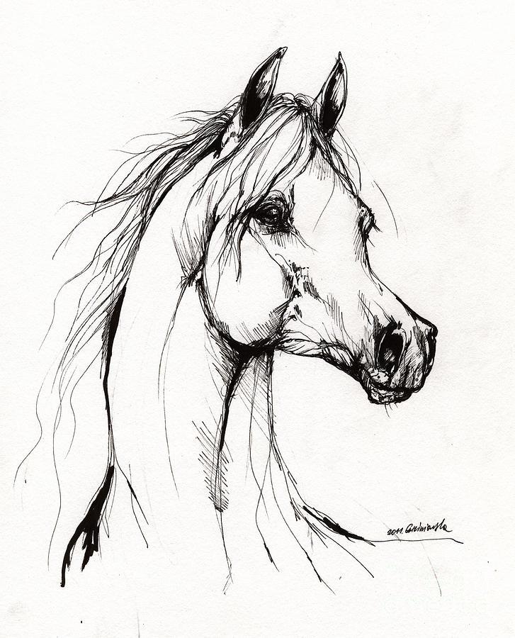 Arabian Horse Drawing 38 Drawing by Angel Tarantella
