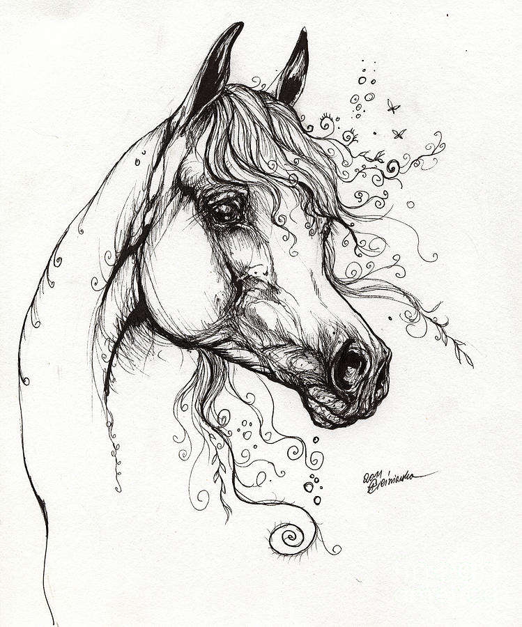 Line Drawing Horse Tattoo : Arabian horse drawing by angel ciesniarska