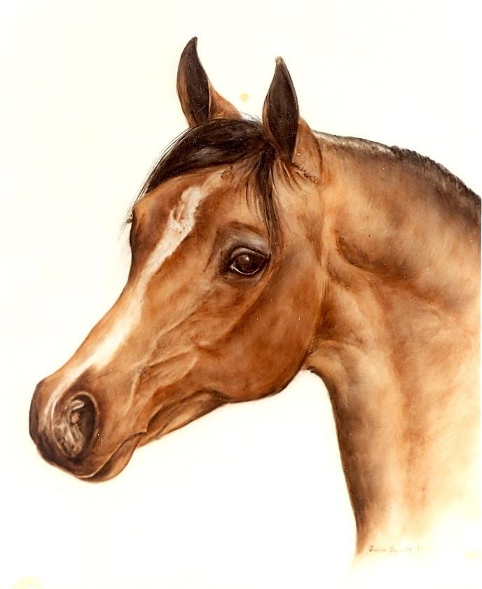 Horse Painting - Arabian Horse Head Study by Julia Sweda