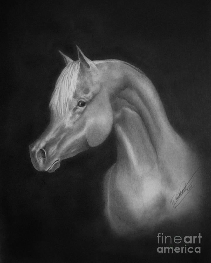 Pencil Drawing - Arabian Night by Lissa Rachelle