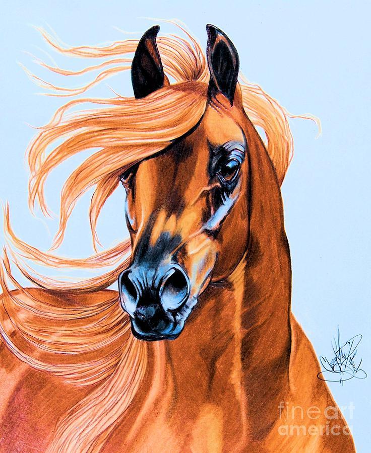 Arabian Portrait In Color Pencil