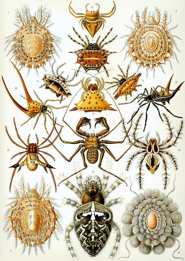 Arachnida Digital Art - Arachnida by Georgia Fowler