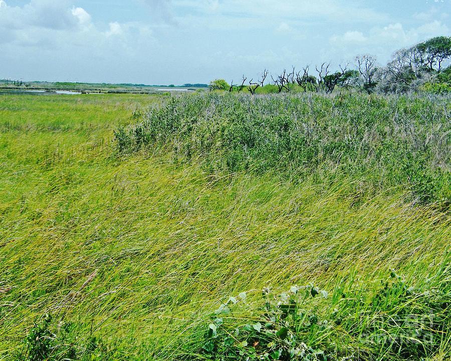 Texas Photograph - Aransas Nwr Coastal Grasses by Lizi Beard-Ward