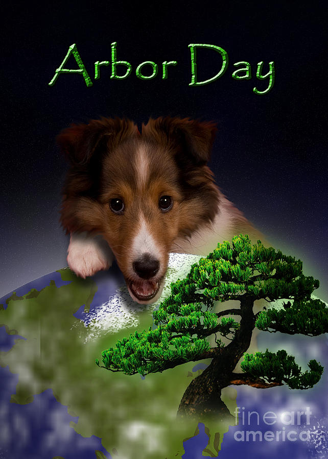 Arbor Day Photograph - Arbor Day Sheltie by Jeanette K