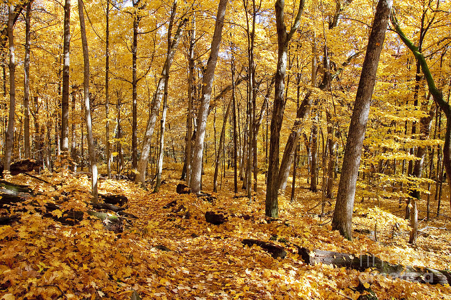 Arboretum Trail Photograph by Steven Ralser