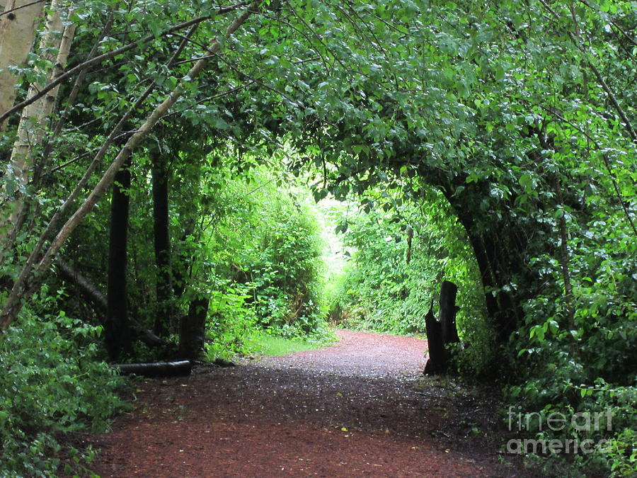 Nature Photograph - Arched Pathway by Melissa Stinson-Borg