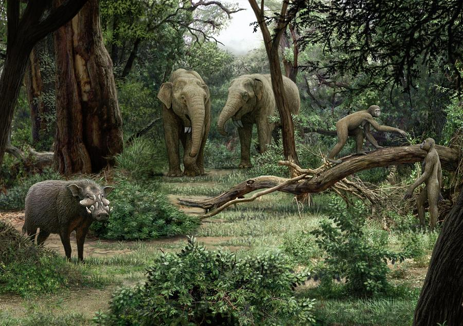 Ardipithecus Ramidus Landscape Mauricio Anton on Baby Dinosaurs