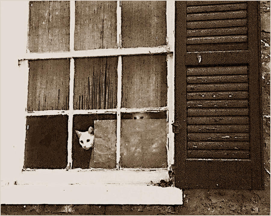 Cat Photograph - Are They Home Yet by Wynn Davis-Shanks
