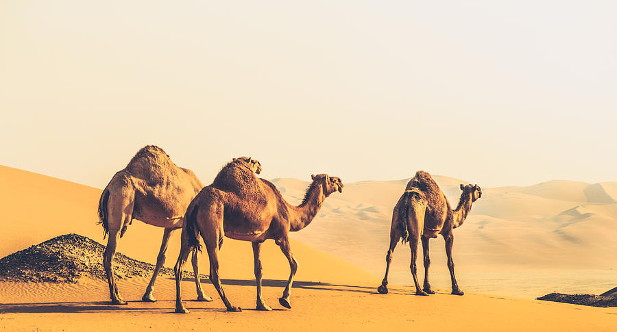 Adventure Photograph - Are We Lost  by Ahmed Rashed
