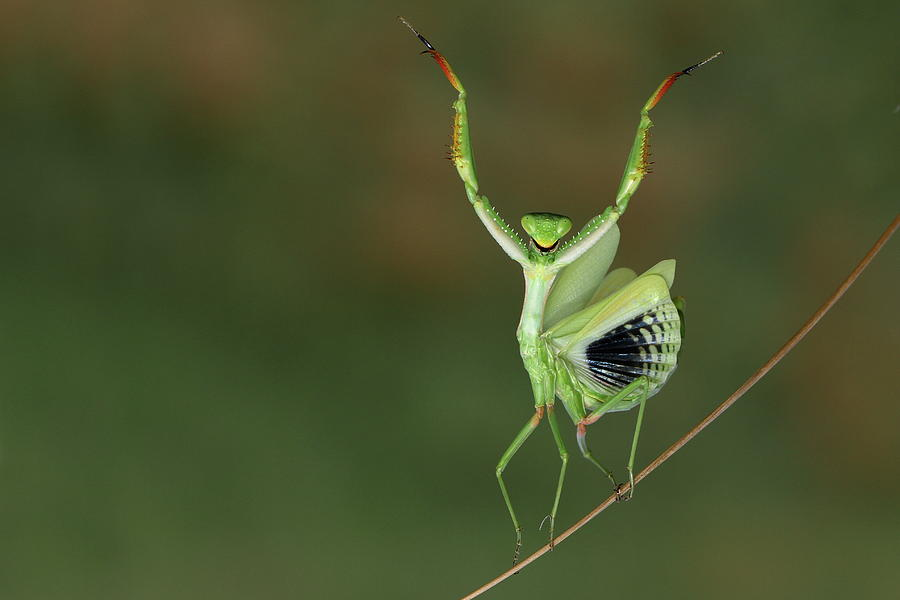 Are You Gonna Dance With Me Photograph By Hasan Baglar
