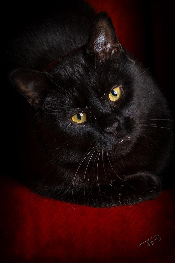 Cat Photograph - Arent I Too Beautiful To Behold by Tom Buchanan