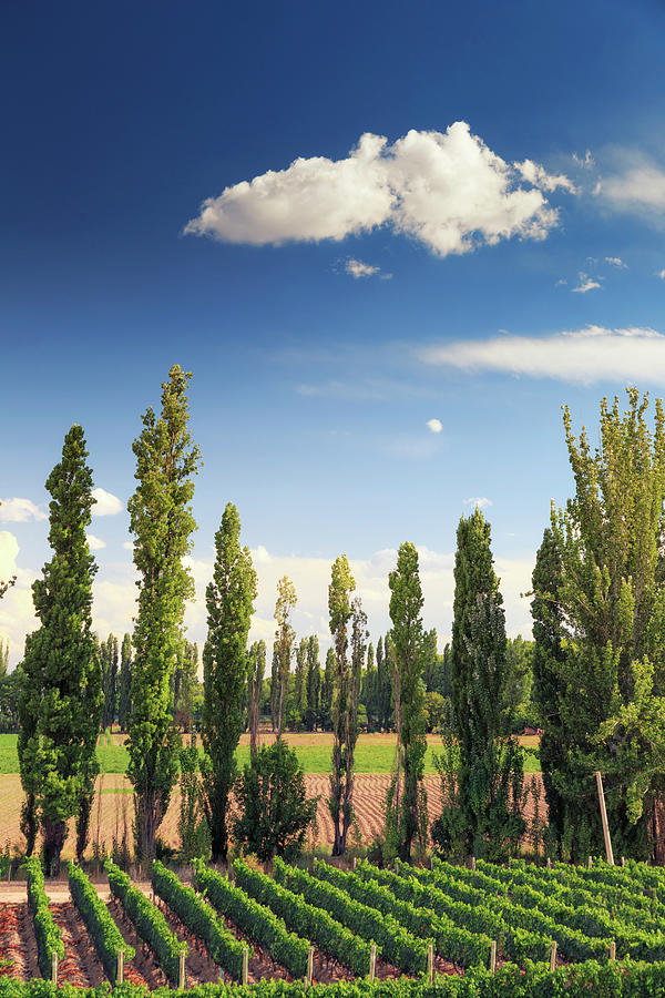Argentina, Mendoza, Wineries Photograph by Michele Falzone