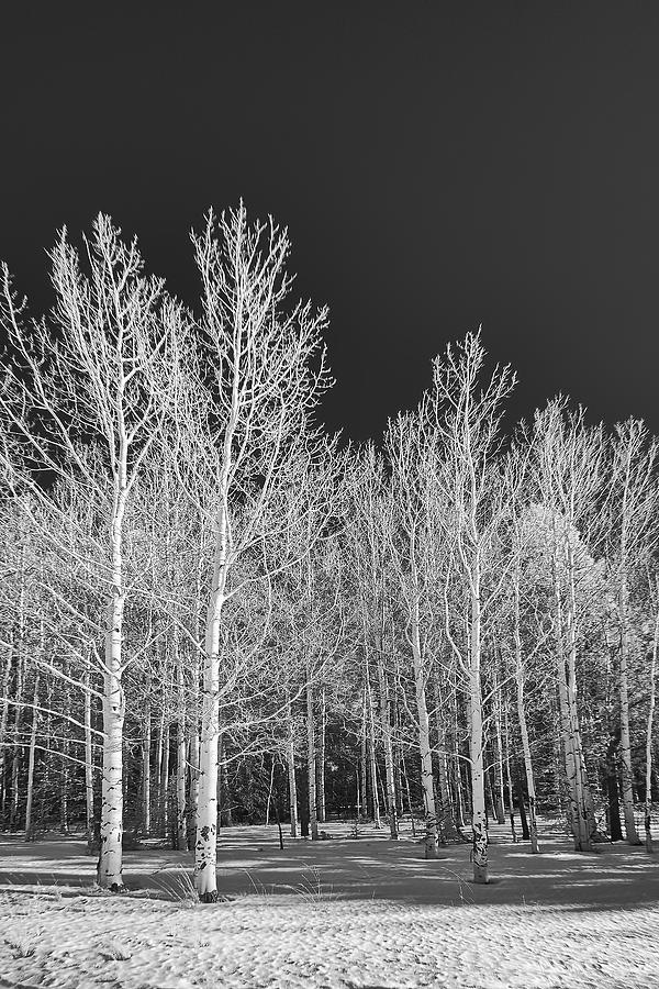 Arizona Aspens - Infrared by Michael Yeager