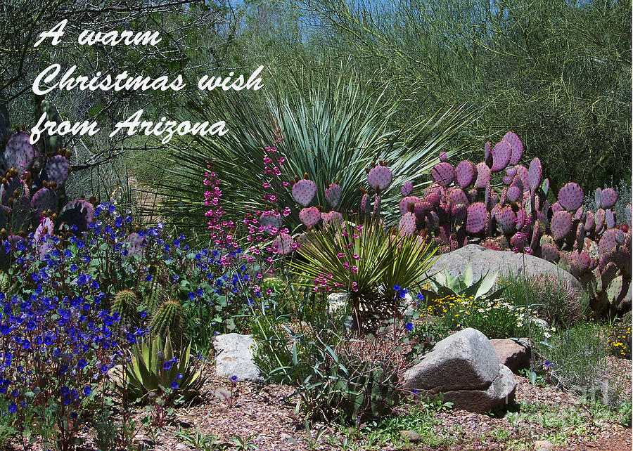 Arizona Christmas Card - Cactus Variety Photograph by Kathy McClure