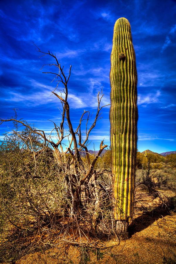 Cactus Photograph - Arizona Landscape IIi by David Patterson