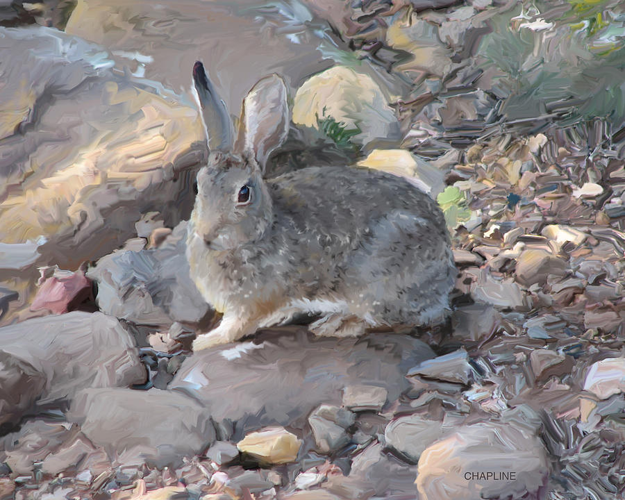 Arizona Rabbit by Curtis Chapline